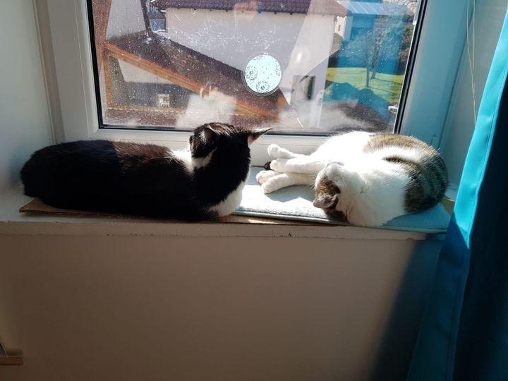 Minnie & Tiger