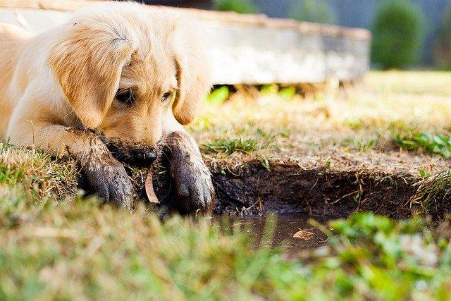 Welpenfutter, Hundefutter, Futter für Hunde, Hundefutter selber machen,