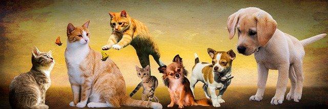 Allergische Hunde und Katzen - wie sie zur wirksamen Linderung behandelt werden können