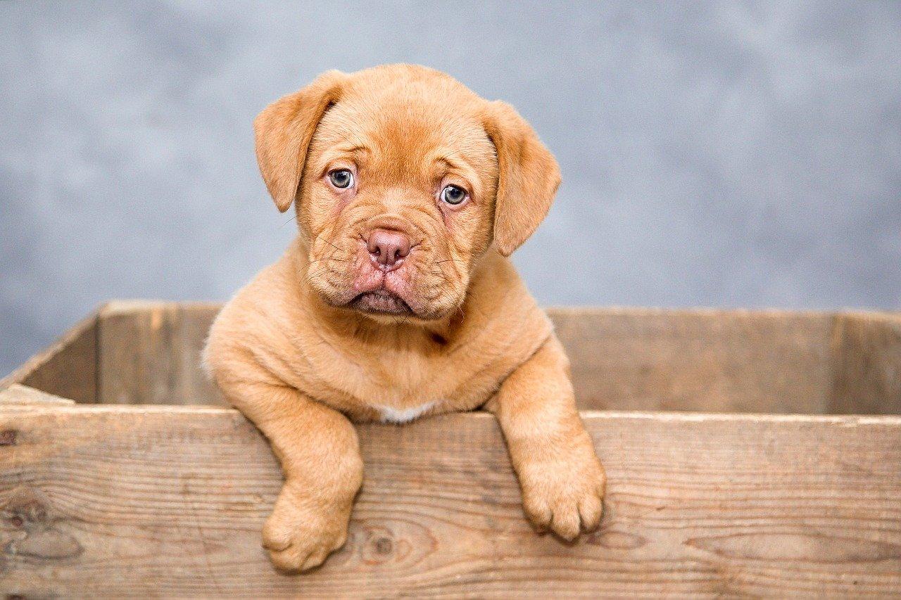 Warum ist eine Tierversicherung für Hundebesitzer so wichtig?
