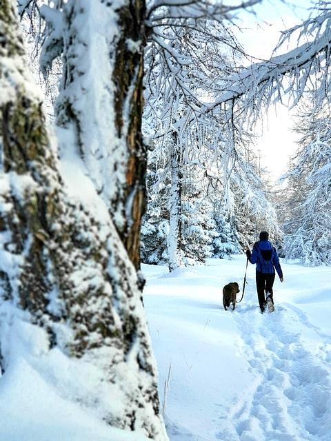 Naturwirt Leutasch: Der beste Urlaub mit Ihrem Hund!