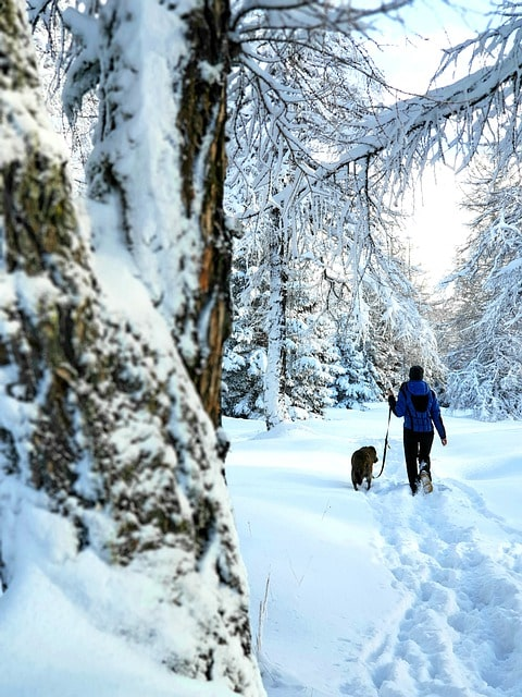 wandern mit Hund, Naturwirt Leutasch, Leutasch, Tirol, Hunde