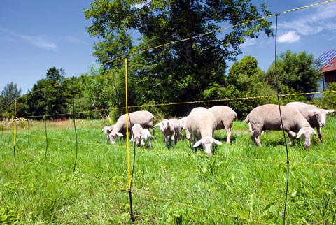 Schaf-/ Geflügel-/ Wild- und Kaninchennetze - Equifarm - Einstreu ...