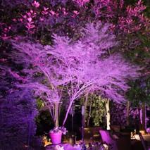 LED Farbinszenierung Garten Gelände