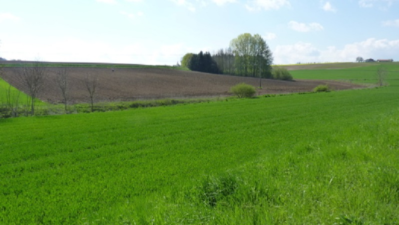 Grundstücke / Ackerflächen