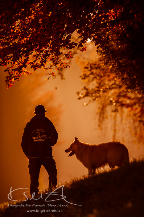 Standort BALANCE Hundeschule, Hundetraining