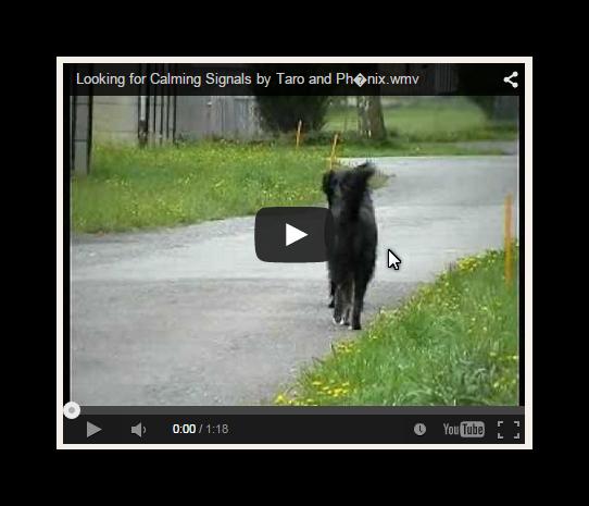 Calming Signals - Konfliktsignale beim Hund