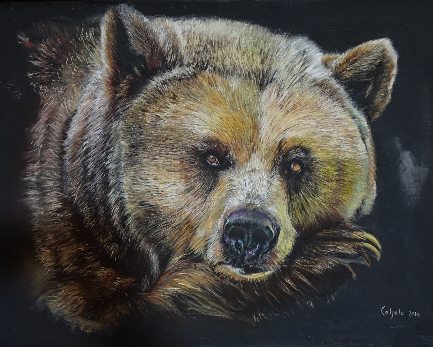 60x80 - Repos d'ours