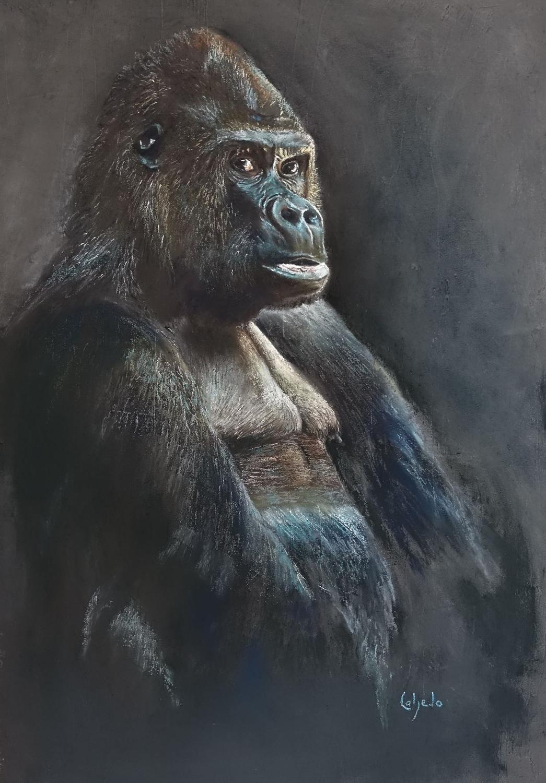 60x90 : gorille