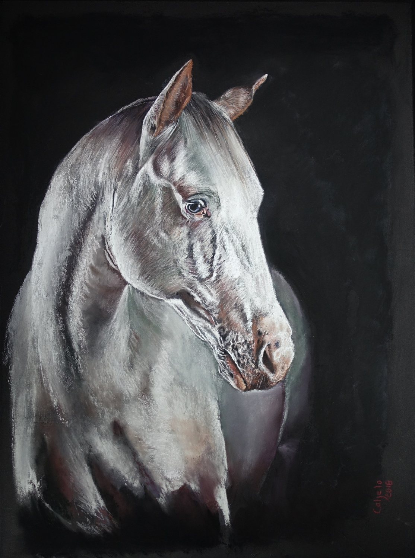 60x80 - cheval blanc