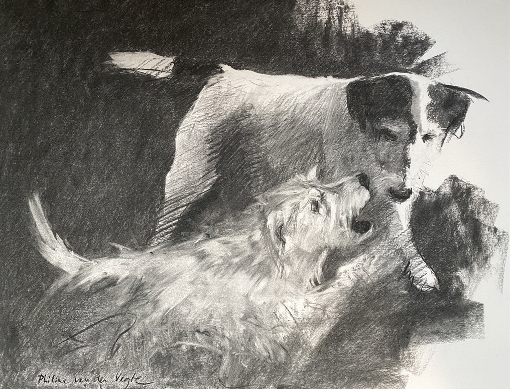Charcoal drawing of two Parson Russel terriers playing