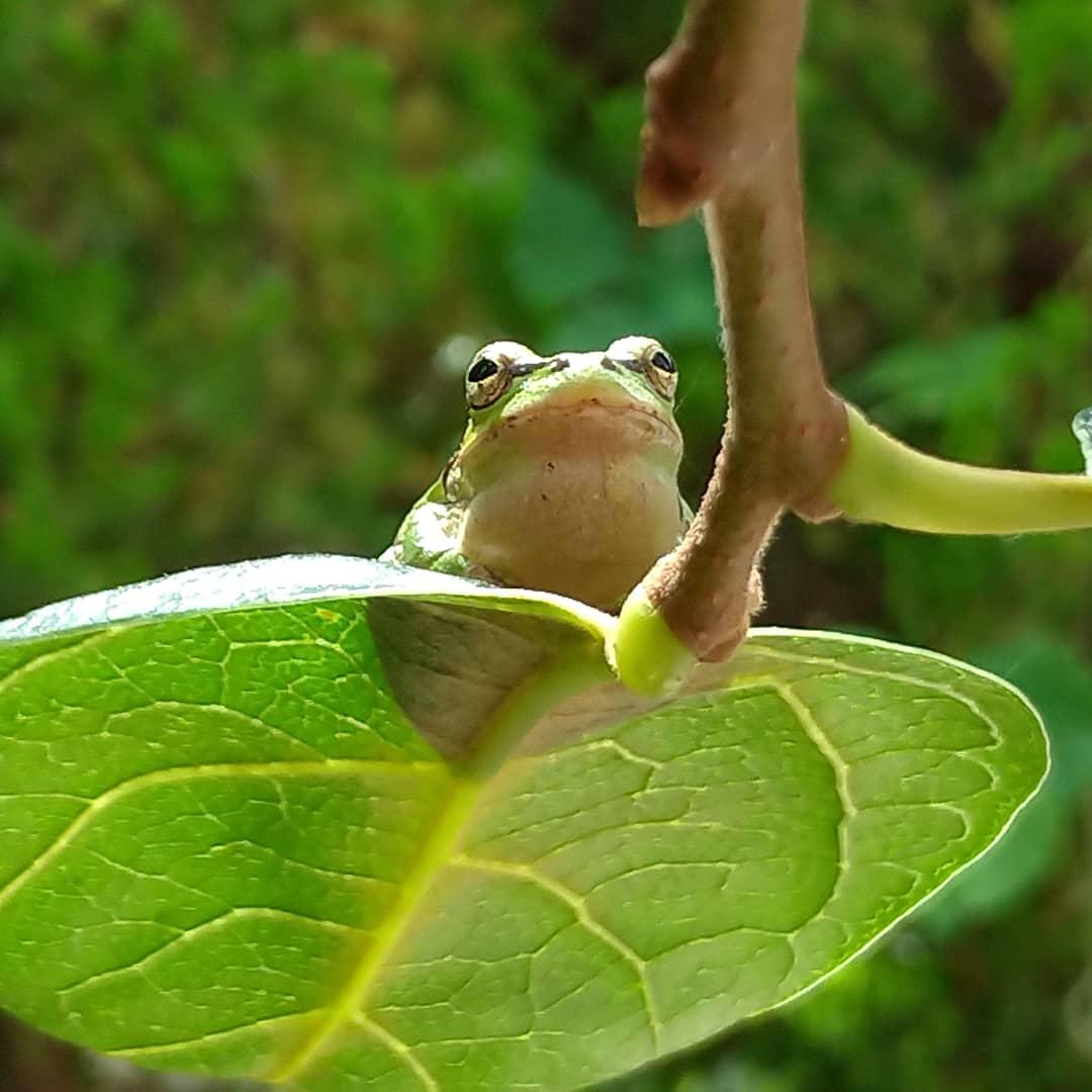 夏にはカエルさんの合唱が聞こえる自然に恵まれた環境