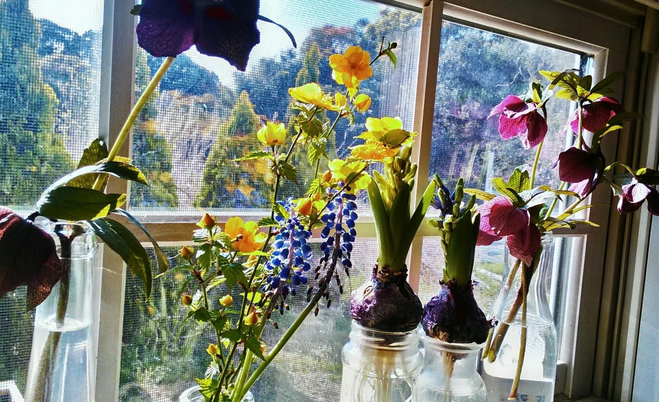 お花が大好き。花に囲まれて暮らしたい・・・と常々思っています。でも面倒な手入れは苦手^^;