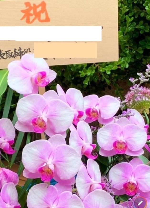 祝 胡蝶蘭の贈呈木札へ揮毫
