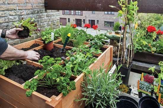 30cm 四方栽培のトレードマークで、集約栽培作物を分け、限られたスペースから最大に収穫。