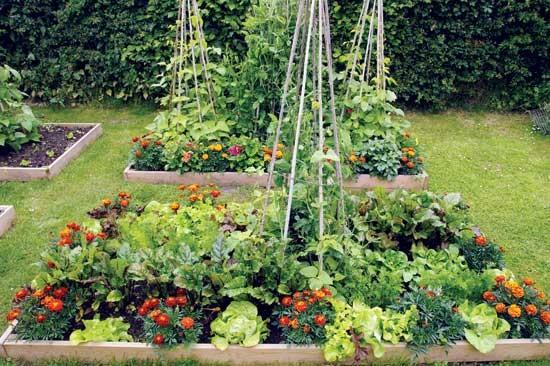 つる作物(インゲンマメやキュウリなど) を垂直に育てると、限られたスペースで たくさん収穫できる。