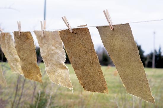 地元の原産の植物から作られた紙(ここではスズメノチャヒキ属、 小さなブルーステム(bluestem)、アヤメの葉)は、通常出逢う紙とは 異なり、楽しく創造的なプロセスの成果物。 Photo by Allison Evans.
