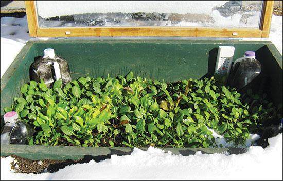 水で満たされた黒いプラスチック容器は、EarthLinkの南向きの冷床のそれぞれの角にあり、デンバーの凍てつく冬の気候の間、補足でサーマルマスをもたらす。