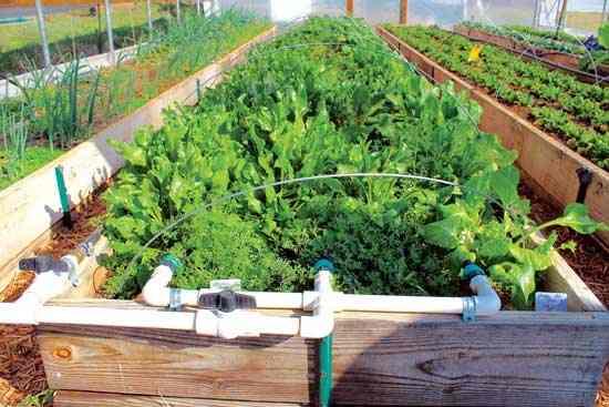 この潅水システムのおかげで、スコットとスー ザンは Hill Farm で省力的に新鮮な作物を育 てている。Photo by Kurt Jacobson