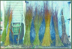 コラクルの枠組みはヤナギの枝で作られる。