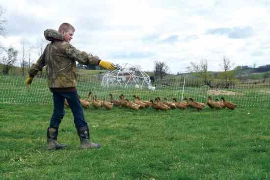 13才のトラビスが移動させているアヒルは、アヒルの卵のビジネスのために育てている。10才で始めた。Photo by Shutteye Photography.