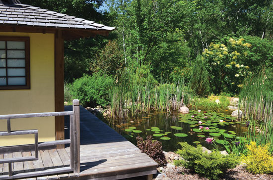 植物と野生生物が繁殖する、著者の南部オンタリオ州の池では、機械システムや化学品は不要。