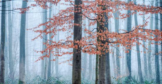 マザーアースニューズ 森林 自然
