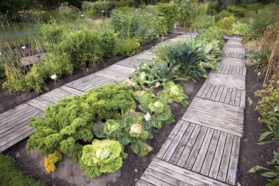 揚げ床で育てたり、常設の植床と通路を決めたりすることで、土壌圧縮を回避し、栽培資材を有効管理する。