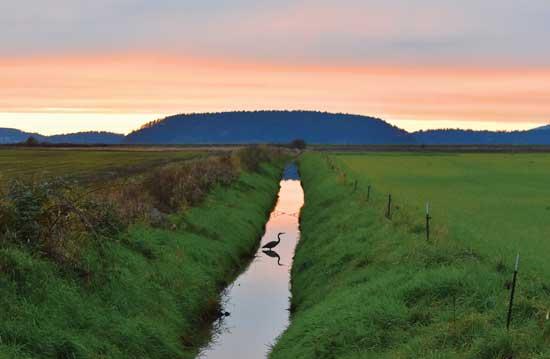 夕暮れ時、溝の中で休んでい るサギが、静かな小川にその姿を映し出している。