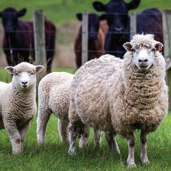 家畜の遺伝的多様性の保護    報告:理想の家クラブの作戦会議    美味しい野草5種類