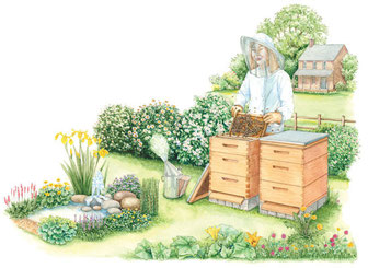 ラングストロース巣箱が、フード付の全身防御服を着た養蜂家に世話されている。彼女は、スモーカーを使って蜂の防衛行動を抑えている。