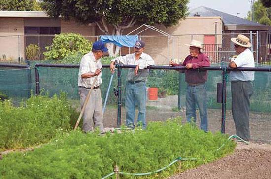 ロサンゼルスの180区画あるStanford-Avalon Community Gardenの会員たちが親睦を深めている。