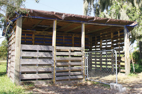 廃材の木製パレットで作った二人の牛小屋。