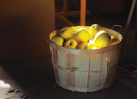 ガラス吹き工房内のバスケットに入ったリンゴ。オーランド州の田舎のナイアガラ地域。Photo by Diane P. Falconer.