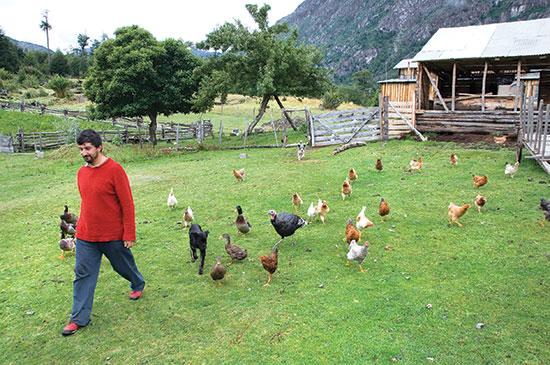 新鮮な牧草地に出られ、この混成の群れは、農場を闊歩して、新鮮な飼料や昆虫を食べられる。
