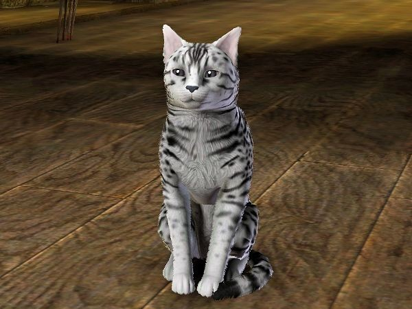 Neige (chat) - www.simsdelirescreations.fr
