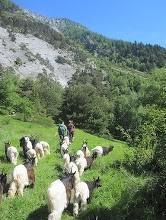 """Weiter gehts und alle Tiere folgen artig ihren """"Betreuern"""".."""