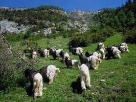 Herrliche Landschaft und bestimmt gutes Futter für die Tiere