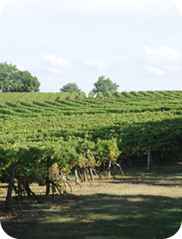 Domaine de Magnaut, producer of quality Côtes de Gascogne wines.