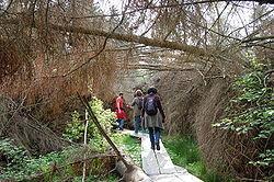 Waldabenteuer- und Kletterpark Kastellaun