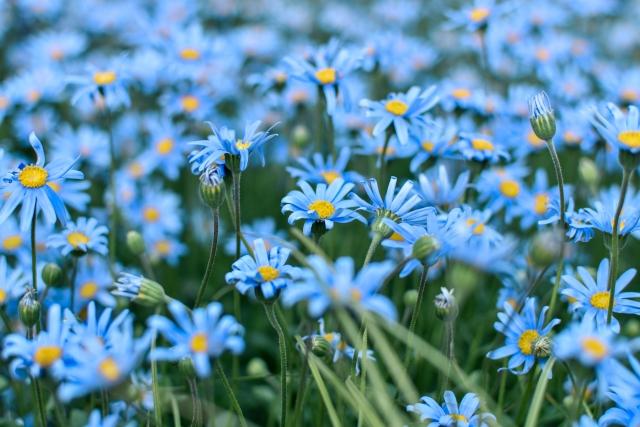 札幌で7ギフトは花とみどりのギフト券を一番高くお買取しております。