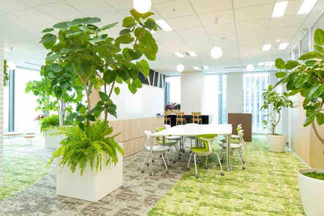 オフィスが観葉植物であふれている画像です。