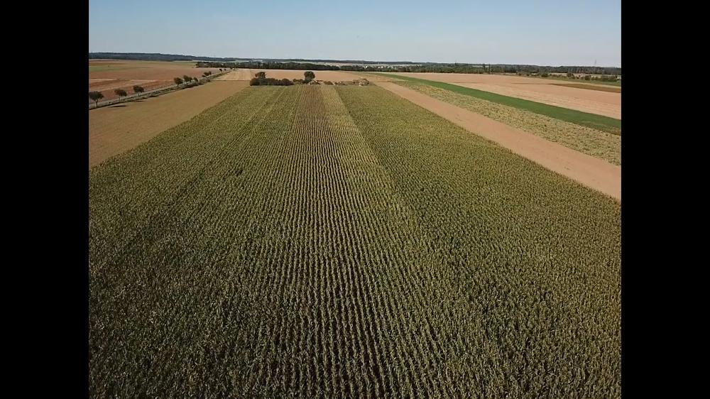 Drohnenbild 2 Wochen vor der Ernte