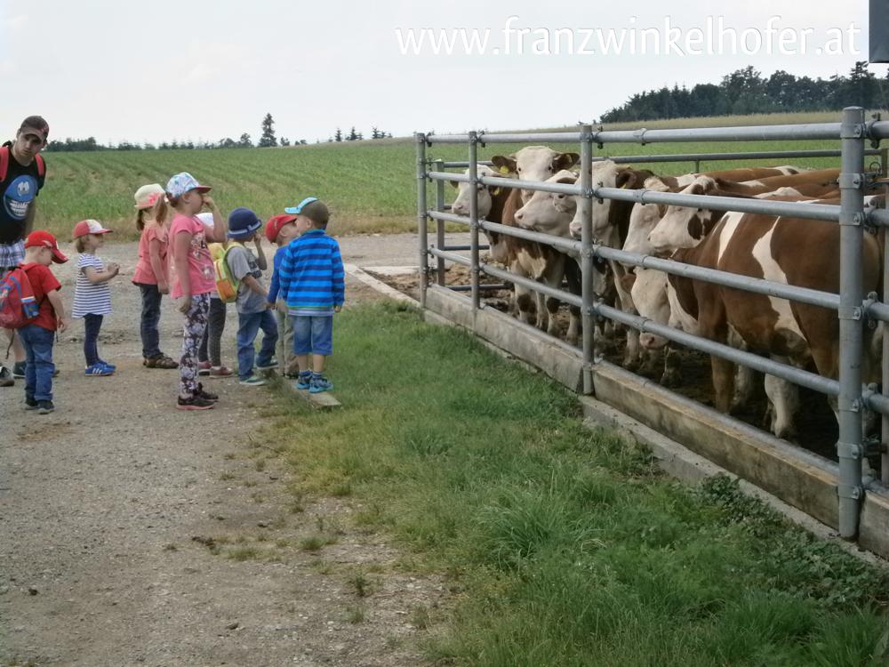 Und bei den Stieren stoßen die Kinder auf gegenseitiges Interesse