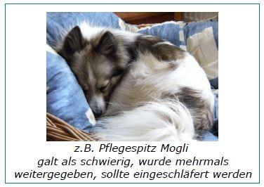 Mittelspitz Mogli