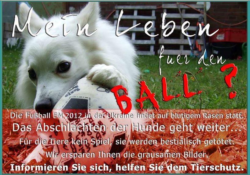 Petition Ukraine Massen Tötung der Hunde wegen Fussball EM 2012