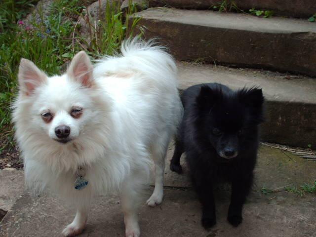 Sissi & Bella