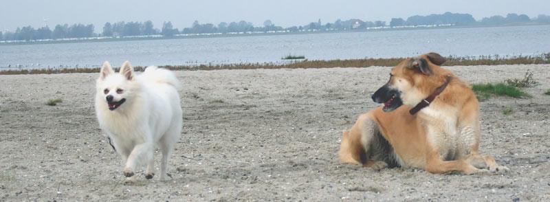 Sissi glücklich am Strand