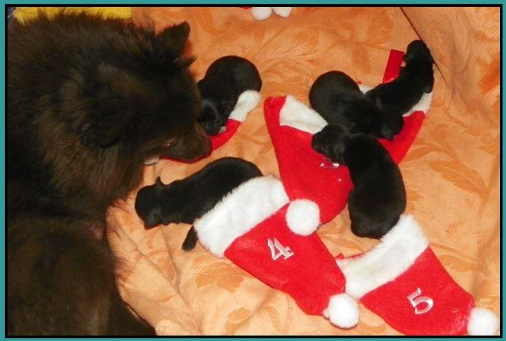 Weihnachtsspitze 2011
