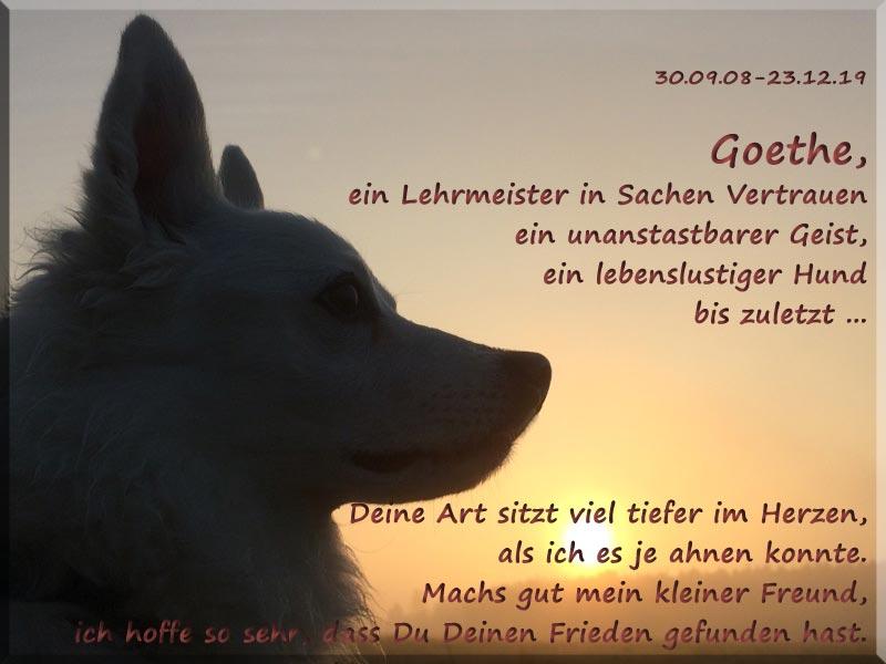 Goethe ging ohne ein endgültiges echtes Zuhause, eins, wie es für ihn perfekt war. Für immer in unseren Herzen ♥